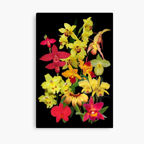 Orchids - Hot and Lively Colors! Canvas Print