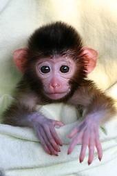 Monkey Love by David Seymour, Jr.