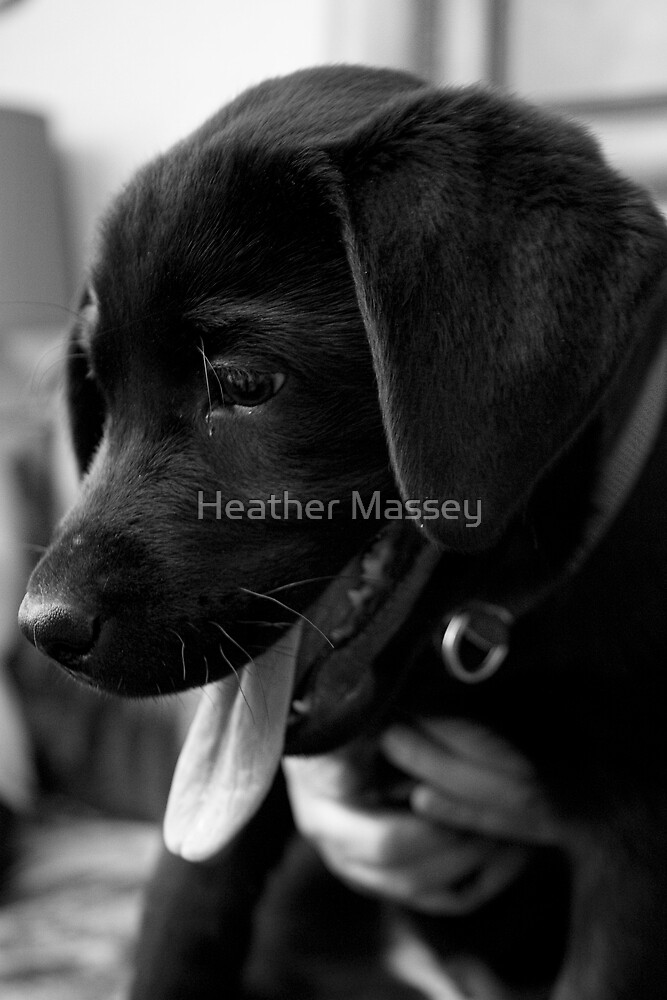 Untitled by Heather Massey