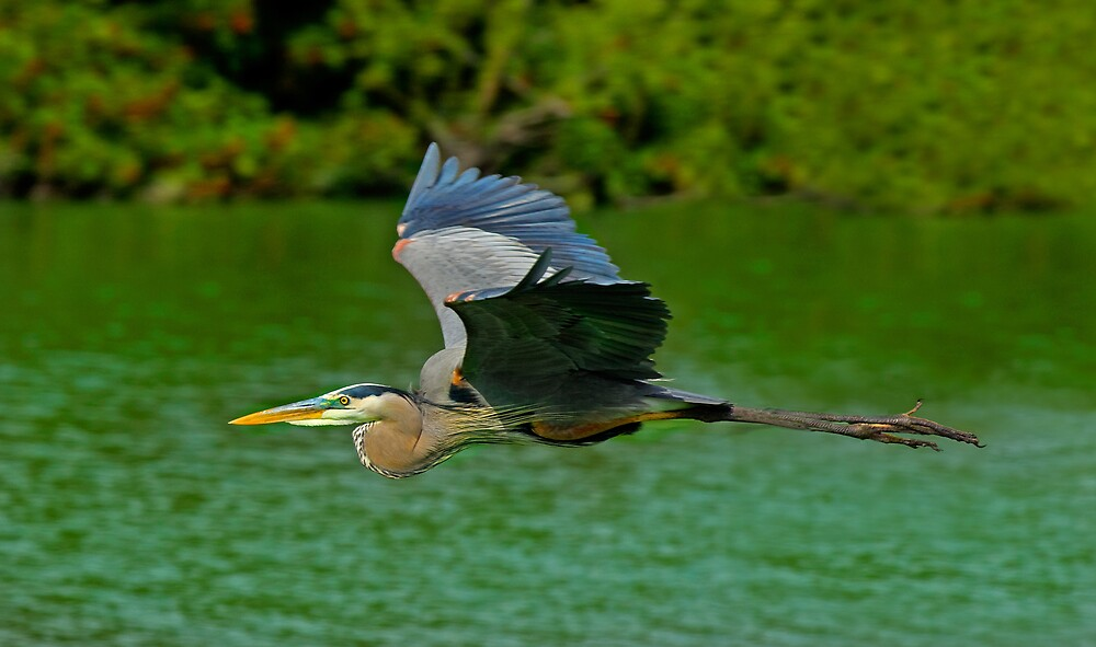 Winging It by Michael Wolf