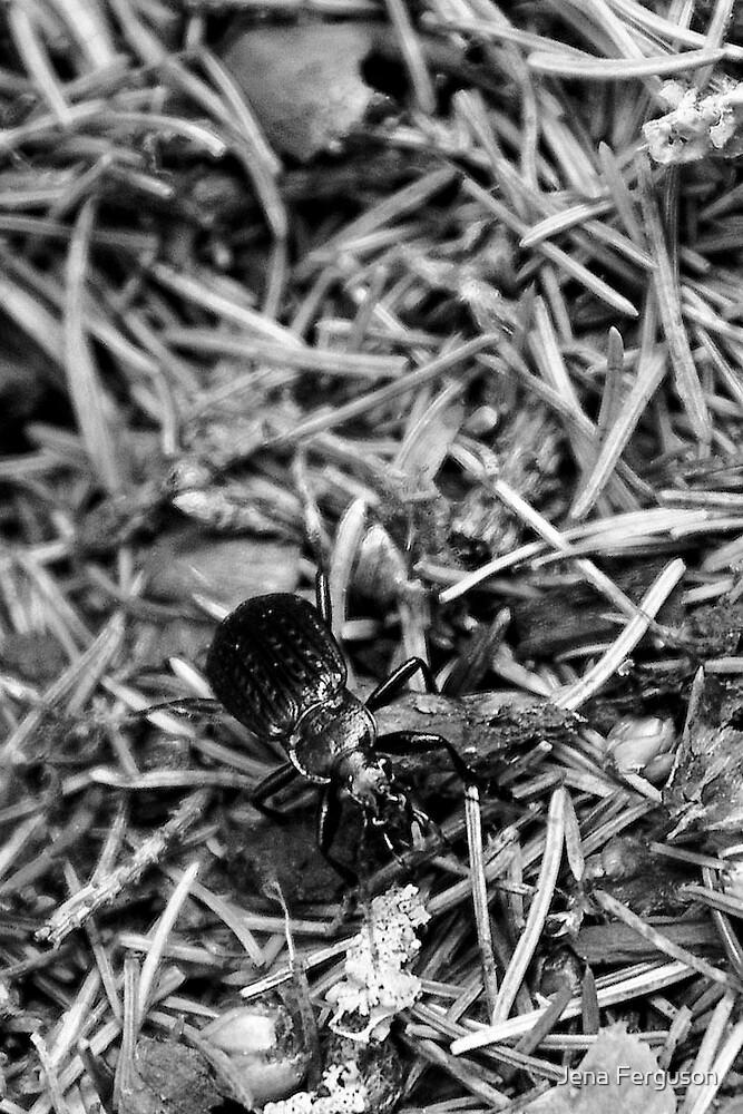beetles walk by Jena Ferguson