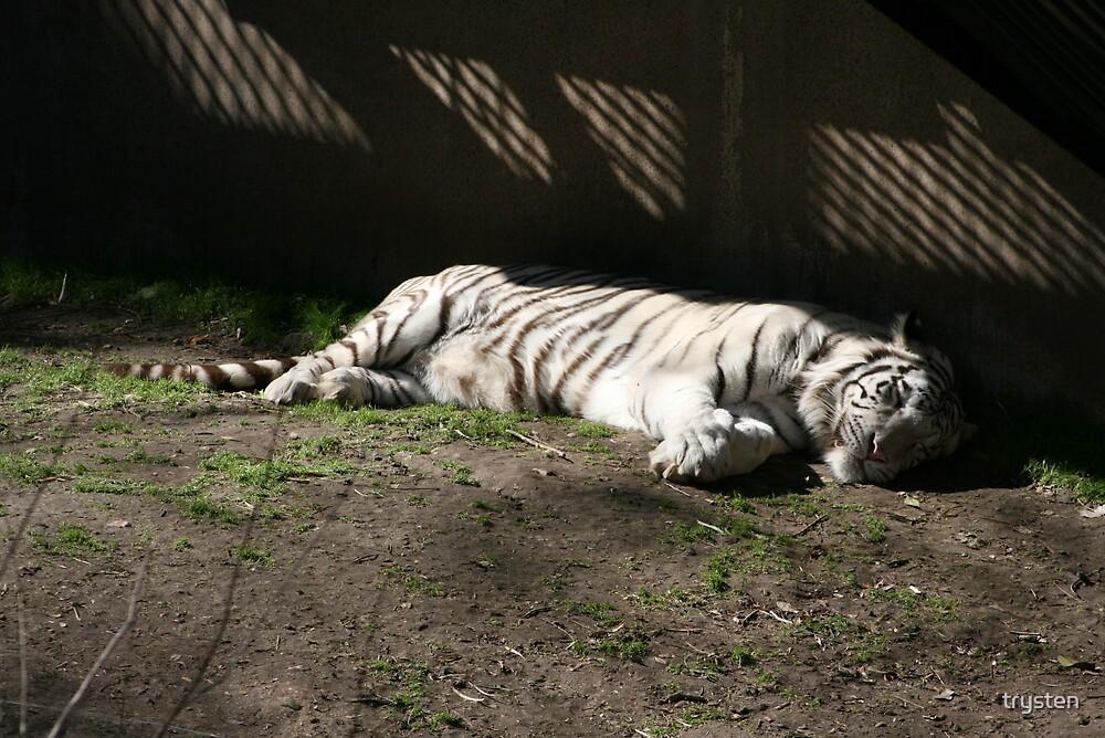 Sleeping Tiger by trysten