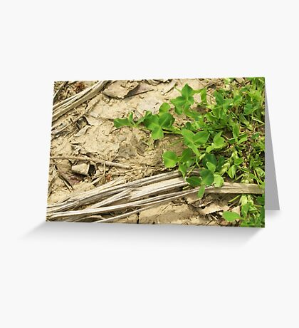 clover on cracked soil Greeting Card
