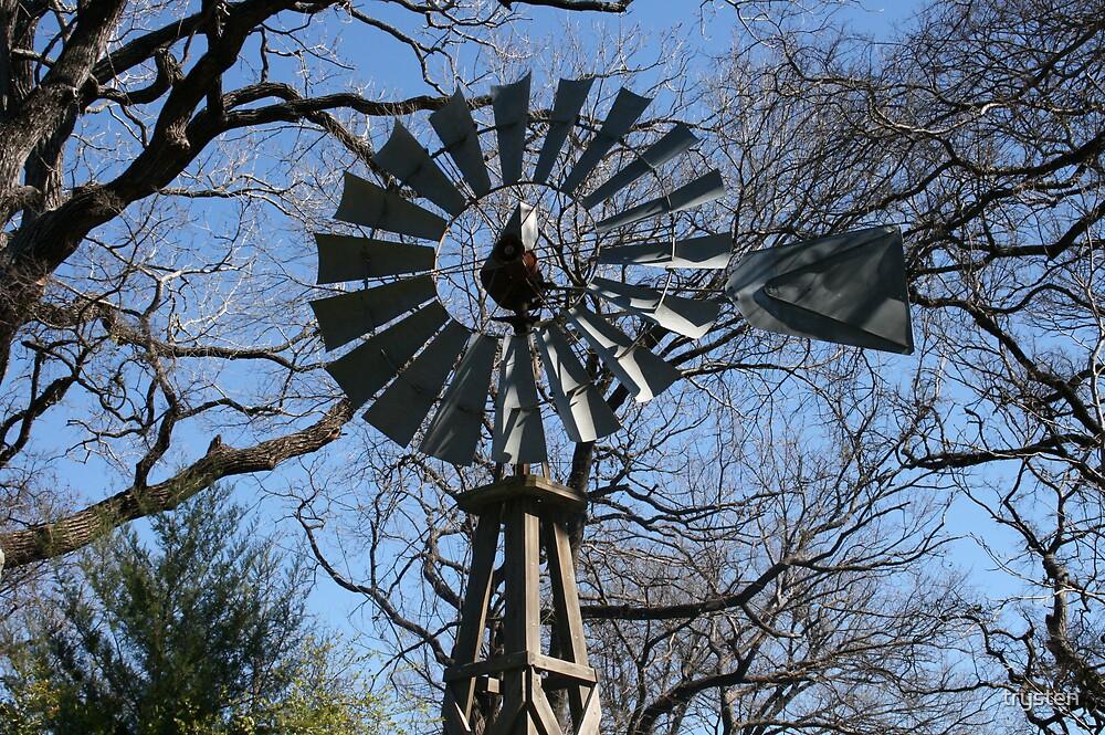 Texas wndmill  by trysten