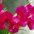 Pink Catterpillar Flower by emele