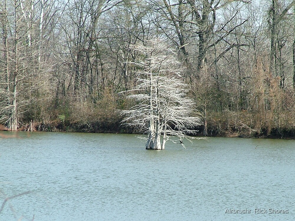 cypress in january by Airbrushr  Rick Shores