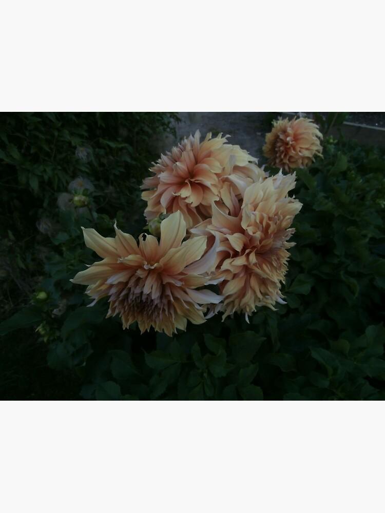 flower by slagseed