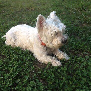 DOG, WESTY, WEST HIGHLANDS  by maria2310