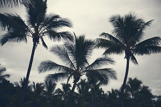 Palm trees silhouettes on the beach on a cloudy day. by Rob D