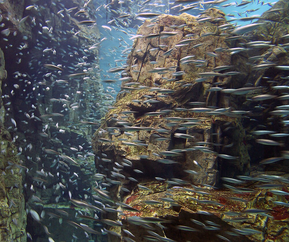 Shoaling anchovies by Ben Temperton