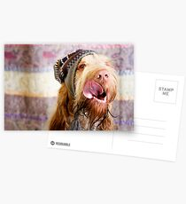 Orange and White Italian Spinone Dog Head Shot with Hat Postcards