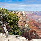 Single Tree at Hopi Point by Caleb Ward