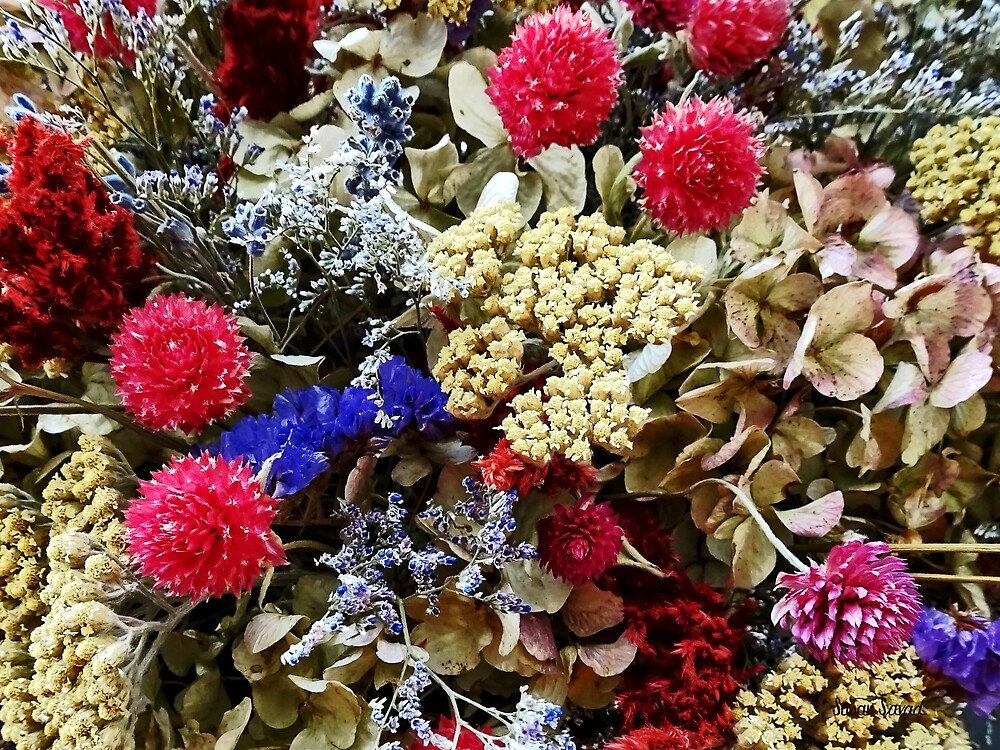 Assortment of Dried Flowers by Susan Savad