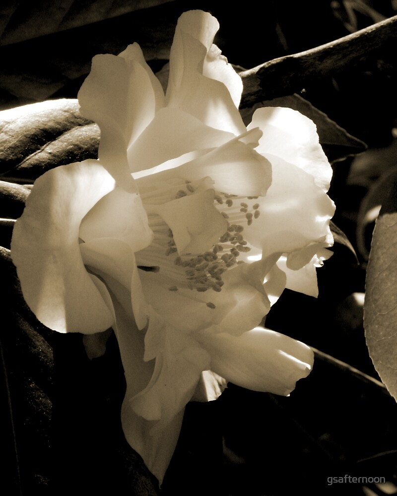 mono camelia by gsafternoon