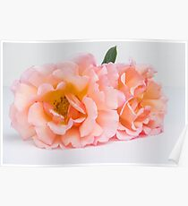 Fresh bunch of pink roses flowers. Poster