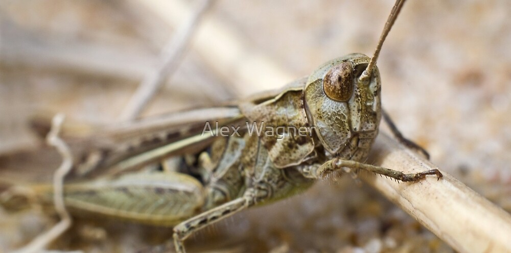Grasshopper Macro by Alex Wagner