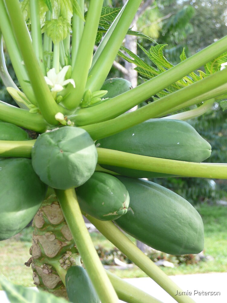 Really Fresh Papaya by Jamie Peterson