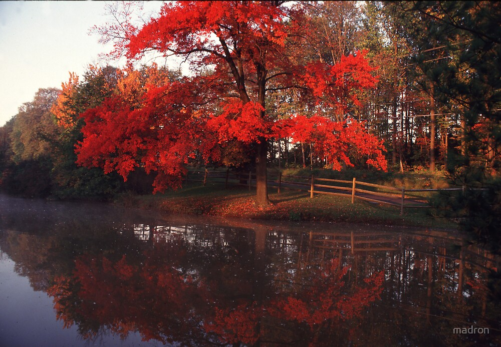 Red Maple along Farm  Pond by madron