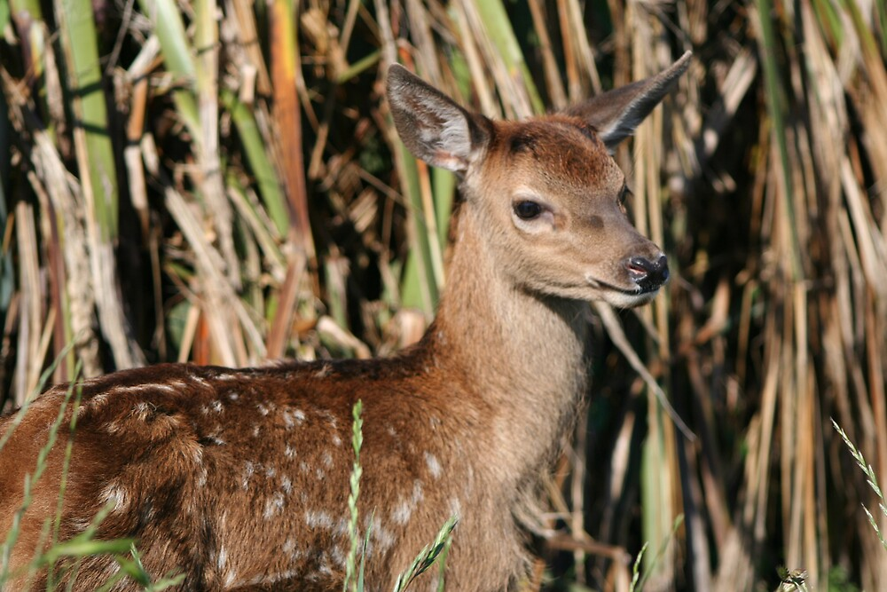 Fawn in the grass by lifesaboar