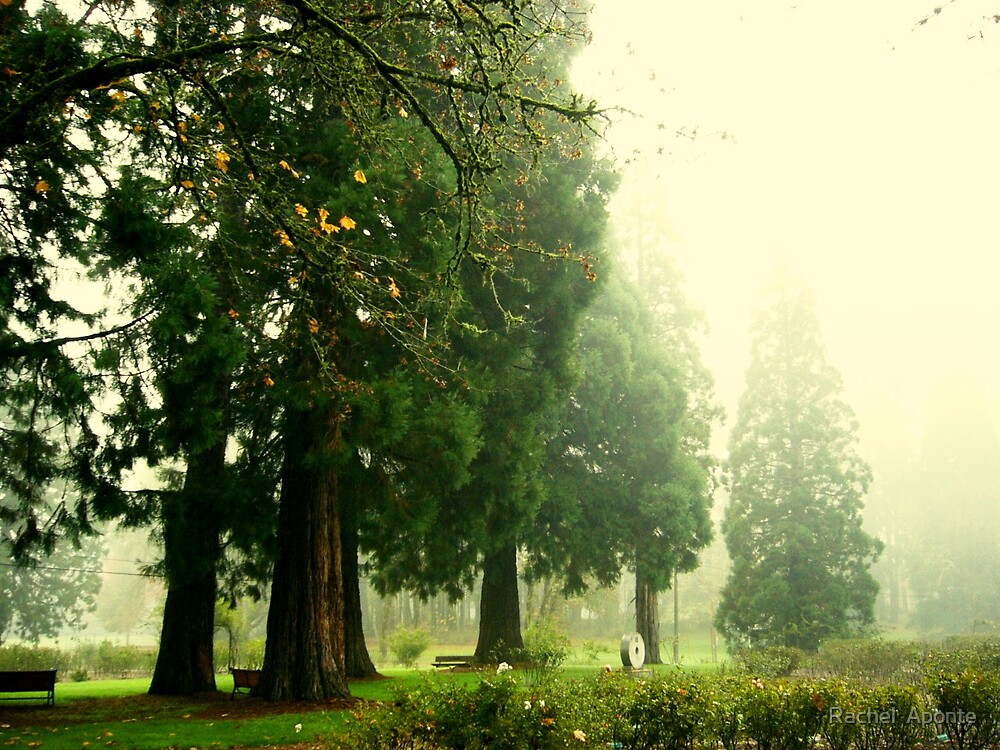 Magnificent Trees by Rachel  Aponte