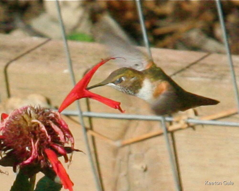 Humming bird by Keeton Gale