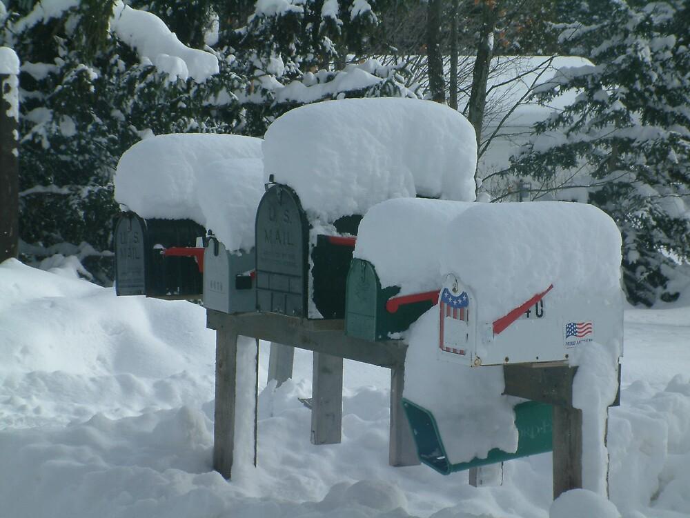 snowfall by Shari Whittaker