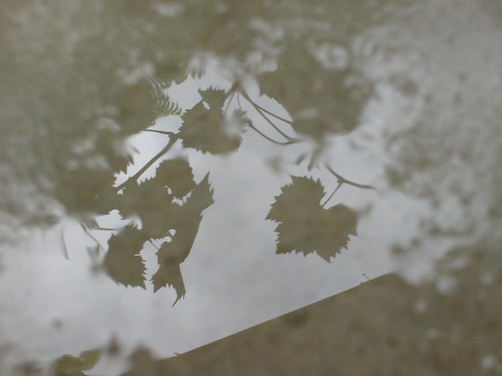 Rainy Day`s by Daniel Rayfield