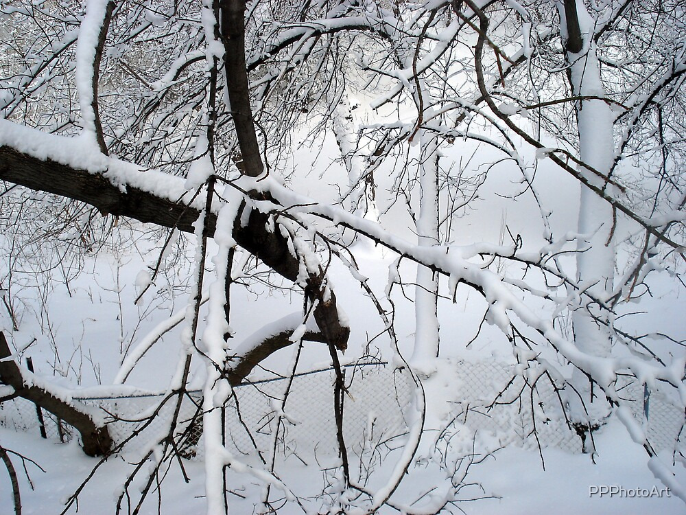 snowy branches by PPPhotoArt