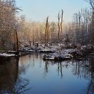 White Oak Swamp- revisited by Betty Maxey