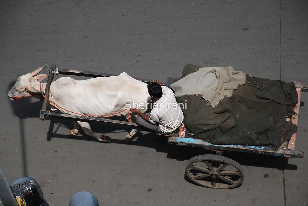 Bullock cart 1 by SheriarIrani