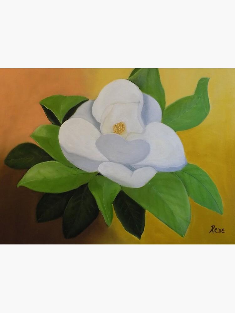 Magnolia In Full Bloom by irenebernhardt