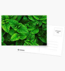 Spring in the garden Postcards