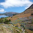The Rannerdale Bluebells from Rannerdale Knotts by Martin Lawrence