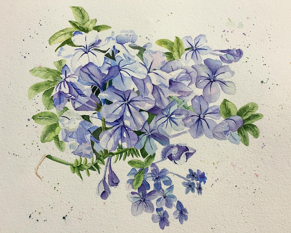 Sunny Plumbago Flowers by Elaine Hill