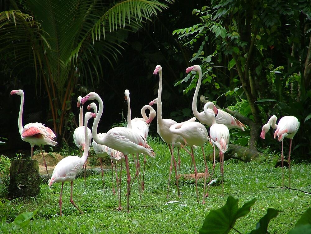 Flamingos 2 by Dieselsmum