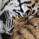Tiger Temple Bangkok by Evania