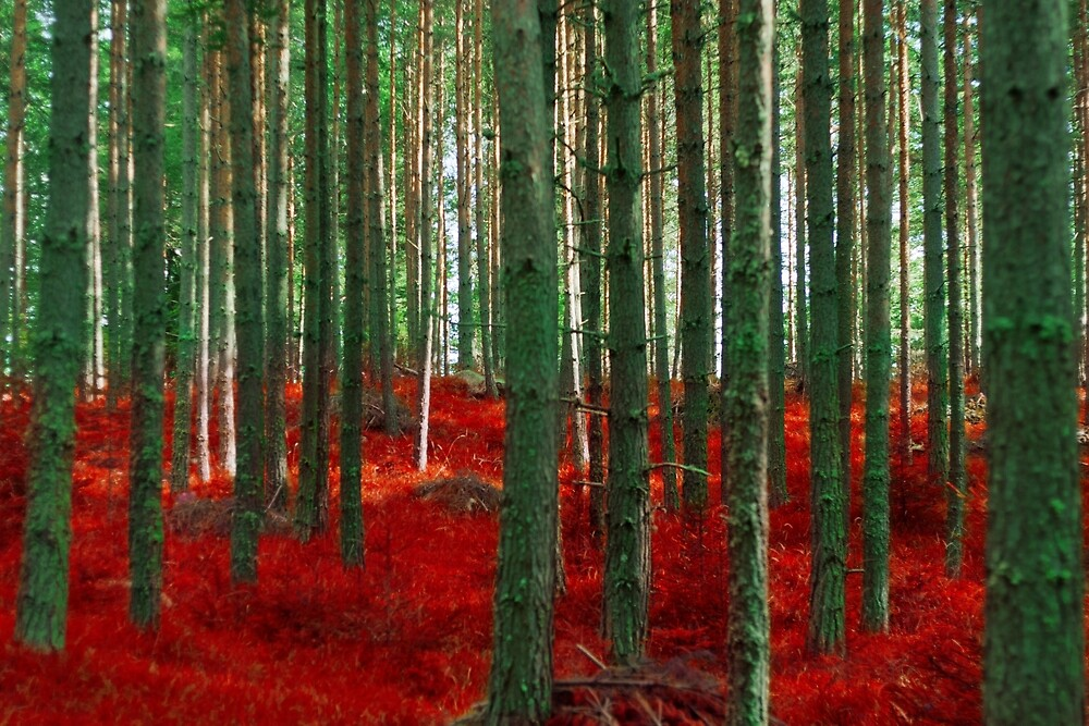 Red Forest by Violet Gray
