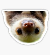 cute baby sloth Sticker