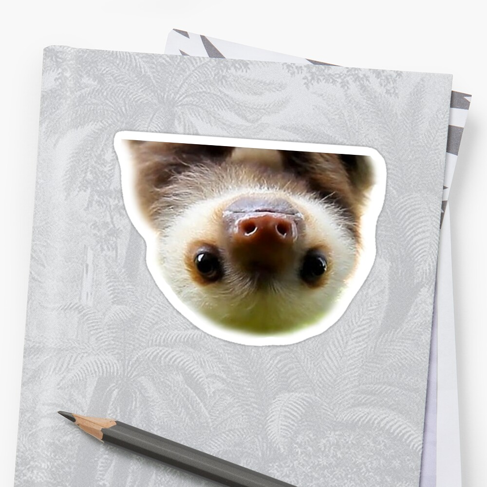 cute baby sloth by pgracew