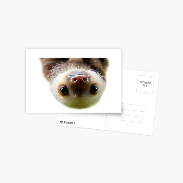 cute baby sloth Postcard