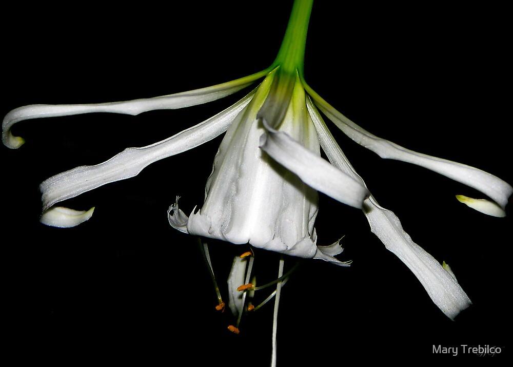 Spidery... by Mary Trebilco