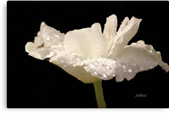 Creamy Delight by Rosemary Sobiera