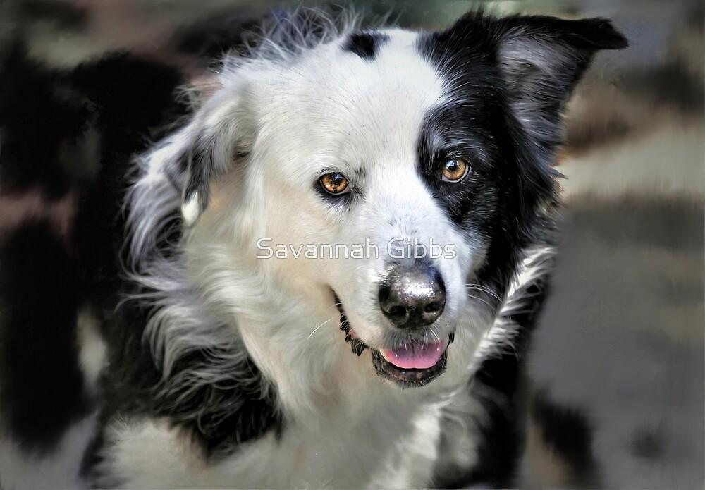 Dog by Savannah Gibbs