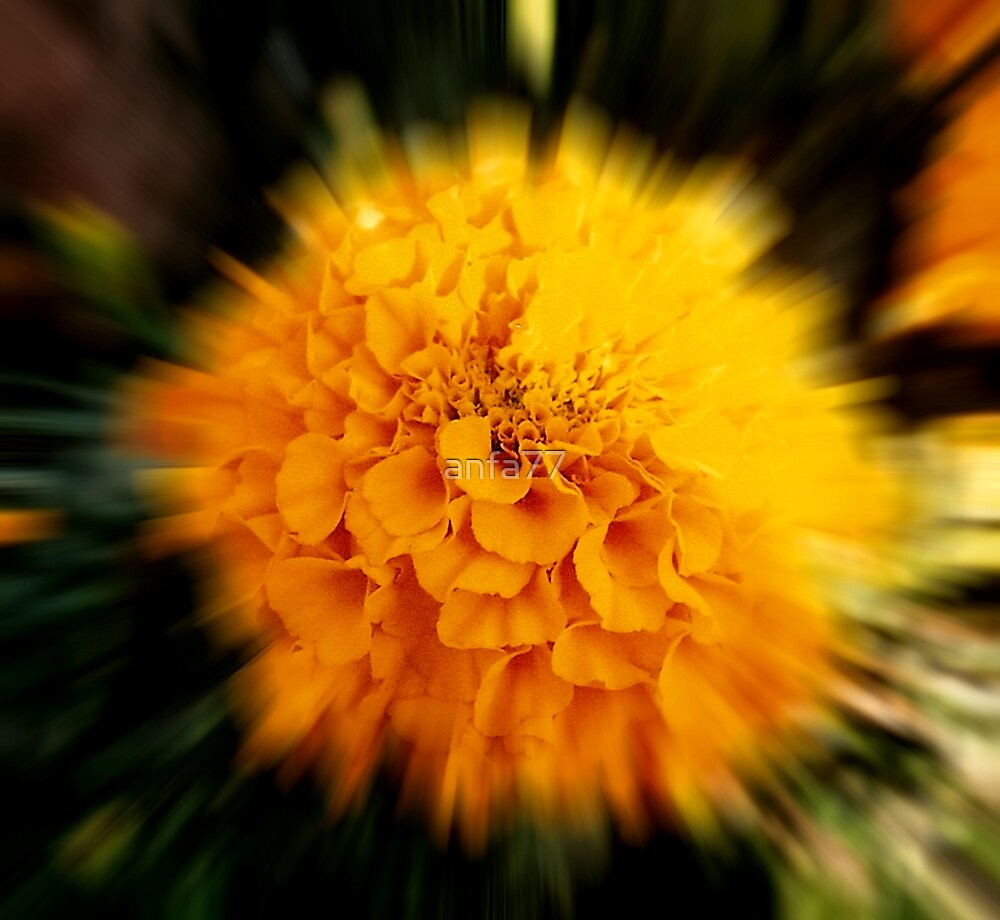 speeding marigold by anfa77