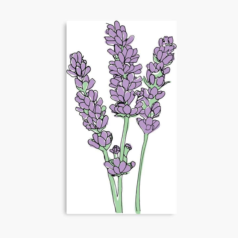 Lavendel-Illustration Leinwanddruck
