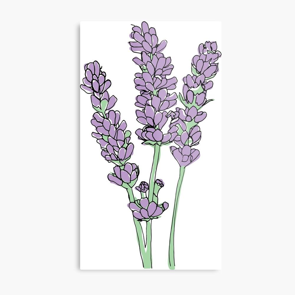Lavendel-Illustration Metallbild