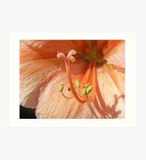 Orange Amaryllis Art Print