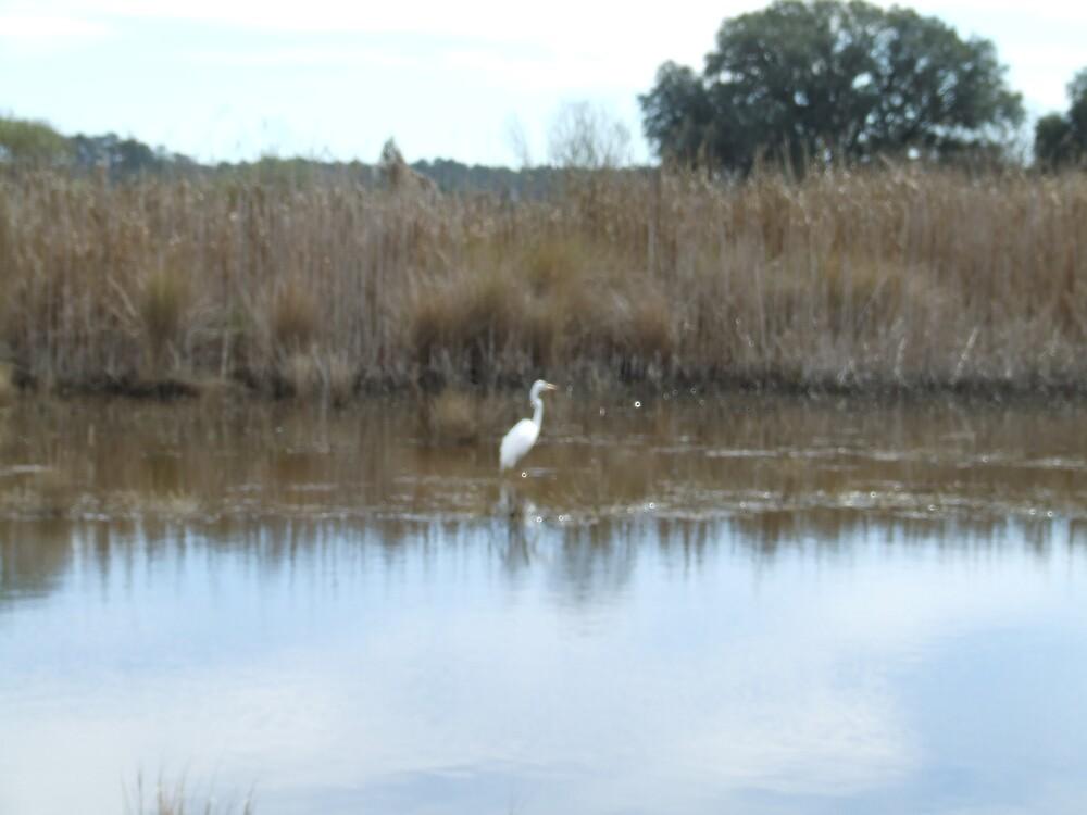 Egret in Salt Marsh by Ray1945