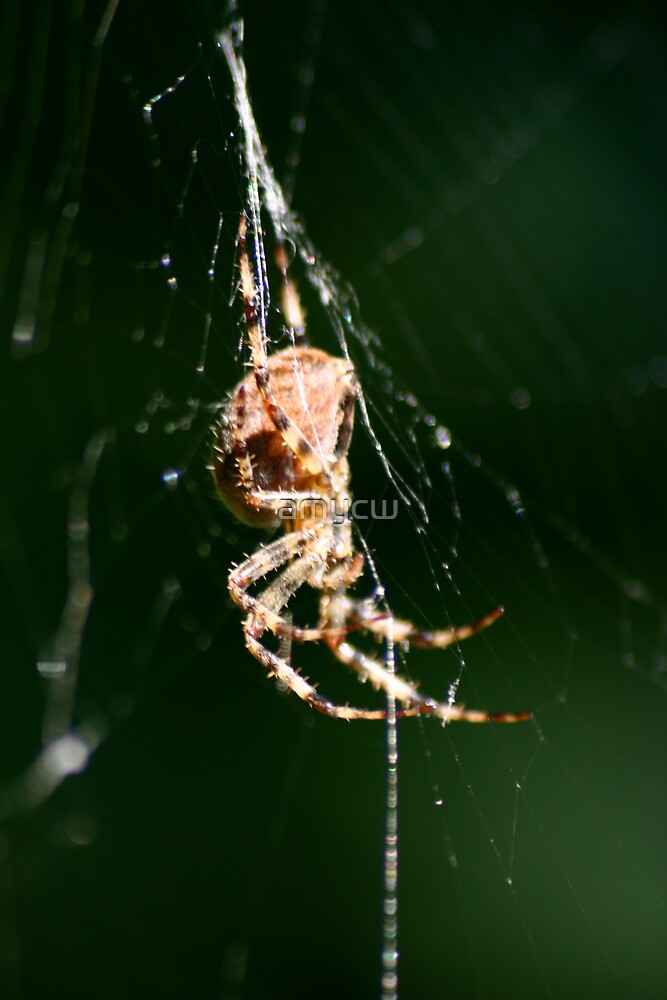 spider by amycw