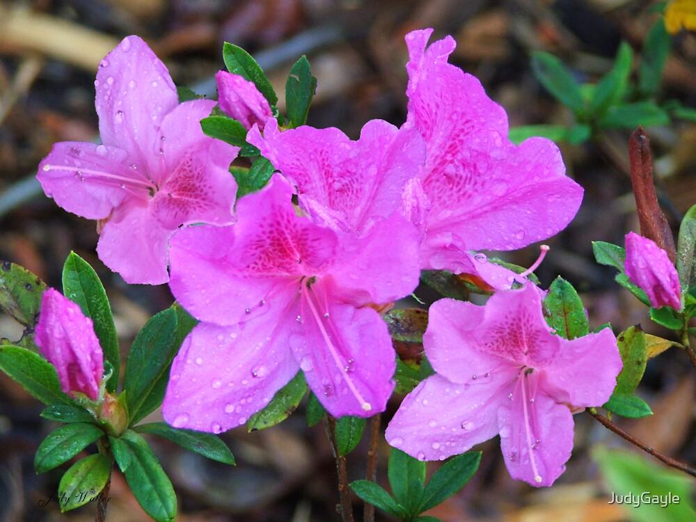 Spring Has Sprung by Judy Gayle Waller